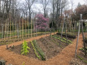 This is the Vegetable Garden at Chanticleer. I admired the diagonal crop displays.