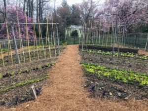 Each bed in the Vegetable Garden was surrounded by a walking path - we walked through the center of the garden to see what was sprouting. I cannot wait to start planting delicious vegetables in my garden back home.