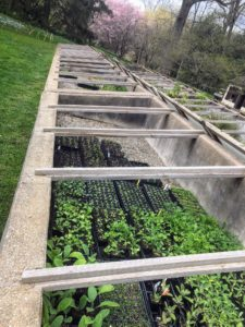 This is the cold frame by the Cut Flower Garden - a transparent-roofed enclosure, built low to the ground, used to protect plants from very cold or wet weather. The transparent top allows for sunlight and prevents heat from escaping.