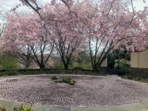 And finally, the gravel circle, beautifully shaded by the grand flowering cherry tree, Prunus 'Accolade'. It is always a joy to visit Chanticleer. Please stop in if you're in the area - it's within 30-minutes of Philadelphia. Visit their web site for more information. http://www.chanticleergarden.org/