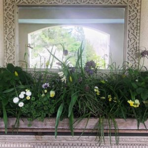 There were so many wonderful specimens on the Sun Porch Mantle, including Bellis perennis 'Bellissima™ White', Carex socialis, Crocus, Fragaria vesca 'Alexandrina', and Fritillaria meleagris.