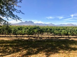Next, they took a wine tasting tour through Stellenbosch, a university town in South Africa's Western Cape province. It's surrounded by the vineyards of the Cape Winelands and the mountainous nature reserves of Jonkershoek and Simonsberg.