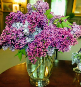 The lilac hedges at the farm are just beginning to fill with big, gorgeous and fragrant clusters. I picked some the morning of the party and placed them in glass vases. These flowers added the perfect decorations for our gathering.