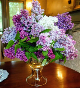 Here is another stunning lilac arrangement. Lilacs, Syringa vulgaris, come in seven colors: violet, blue, lilac, pink, red, purple and white. The purple lilacs have the strongest scent compared to other colors.