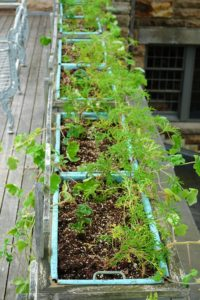 These planter boxes are on the terrace off of what I call bedroom-one. They're filled with scented geraniums, Pelargoniums. Known for its aromatic foliage, pelargoniums are semi-woody, tender, and native to the Cape of Good Hope in South Africa.