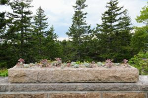 It is planted up with succulents. We planted it in color blocks with pink gravel – the same pink gravel that covers the carriage roads at Skylands. These are some of the succulents that were rooted over the winter from cuttings and pups.