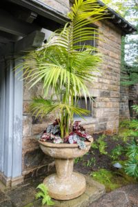 Here is the other planter by the front entrance. Fortunately, because the Kentia palm is so forgiving, it will tolerate low-light and low-humidity conditions, as well as dust, and heat. It will look so beautiful here this summer.