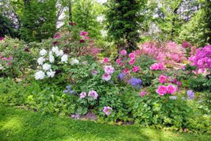 When planting tree peonies, choose a well-drained location, with four to six hours of direct sun or dappled sun and shade all day. A place with protection from drying winds is also helpful.
