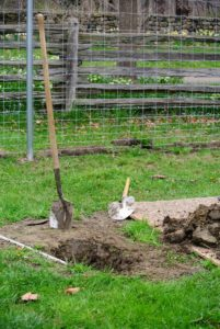 He digs the hole about two to three feet deep, so it can safely secure the tree.