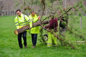 Here is the other tree being carried by our strong crew.