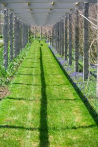 Hyacinths are often found planted in lawns, borders, rock gardens, and in containers. All varieties of Muscari are also fragrant. I have a lot of Muscari planted under my clematis pergola. In full bloom, they look like carpets of blue.