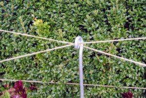 Then jute twine is tied in a zigzag pattern in between the plants.