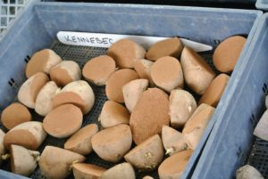 These are Kennebec potatoes - short oval potatoes with smooth pale yellow skin, shallow eyes and white flesh. They're great for fries, hash browns and many other uses even without peeling.