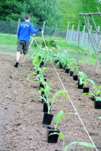 Ryan uses a tape measure to ensure all the plants are spaced perfectly. He takes into consideration the amount of plants and the size of the vegetables when mature.