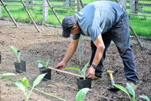 When planting, Carlos also uses a two foot long piece of bamboo to make sure every specimen is planted in the right spot.