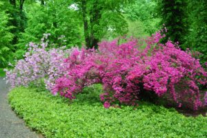 Buy plants that are sturdy, well-branched and free of insect damage or diseases. And, avoid plants with weak, spindling growth and poor root systems.