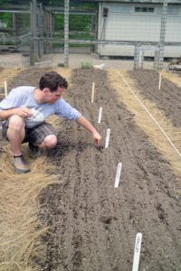 Because we have 44-beds in this garden, it is easier and faster for Ryan to drop the seeds directly into the furrows.