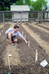 Here, Ryan plants our turnips. We always plant several varieties. This year, some of them include 'Hakurei', 'Niseko', and ''Milan'. 'Hakurei' are best harvested young, up to two-inches in diameter. Eaten raw, the flavor is sweet and fruity, and the texture is crisp and tender.