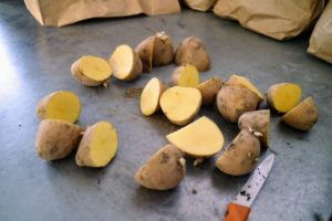 Here are some of the freshly cut pieces. I like to grow many potatoes. Potatoes contain 18-percent starch, two-percent protein, and small amounts of vitamin-B6, iron, niacin, magnesium, thiamin, folic acid and potassium. They are also a good source of vitamin-C, low in sodium and easy to digest.