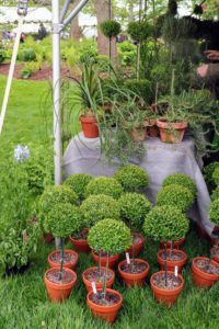 Among their specialties is topiaries. Atlock Farm began producing topiary plants in 1987.
