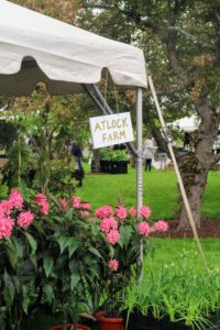 This tent was filled with plants from Atlock Farm. I visited their farm in Somerset, New Jersey several years ago. They always have such wonderful specimens. http://www.marthastewart.com/908015/visit-atlock-farms