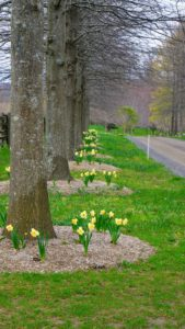 These flowers are all reliable bloomers and can continue to produce each spring for decades.