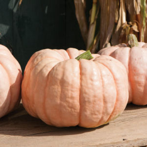 'Porcelain Doll' is a popular favorite. It is a pink pumpkin with sweet flesh that can be used for pies, soups, and other gourmet delights. (Photo from Johnny's Selected Seeds)