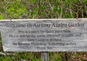 Asticou Azalea Garden was built for quiet enjoyment, and intended for relaxation and contemplation. Visit the web site for more information. http://gardenpreserve.org/index.html