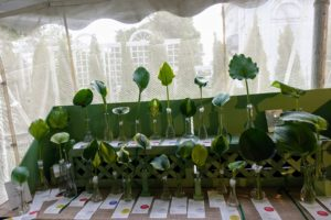 This table showed various hosta leaves - it is such a great way to learn about the different varieties of hosta.