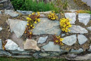 The sedum growing in this stone are in shades of orange and gold - very unique. This wall reminded me of my own stone wall outside my Winter House, also planted with various types of sedum.