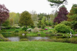 The pond looks so serene. This view is looking west from the south lawn. Here you can see a white Spiraea x cinerea 'Grefsheim', several crabapples nearly open and a Rhododendron yedoense var. poukhanense, which is colored pink.