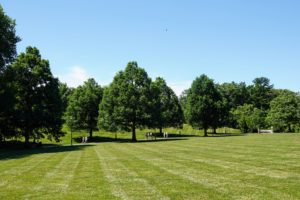 As we toured some of the gardens we saw a gorgeous view across the Cow Lot lined with white oak, Quercus alba.