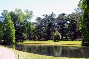 The Blue Atlas cedar, Cedrus atlantica, provides a pretty backdrop behind Longwood's Small Lake. The Blue Atlas cedar, the most popular of all Atlas cedars, is a majestic evergreen tree, with limbs covered with patches of green or blue-green needles. It maintains a narrow conical form before widening into a pyramidal form after about 20-years.