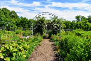 The tour then walked through my glass greenhouse and attached head house and then out to the flower cutting garden - it's so full of colorful blooms this time of year.