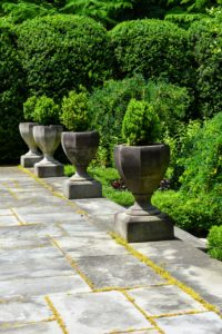 I also plant boxwood in stone urns and place them on the Summer House garden terrace. These urns are emptied and covered during winter and then replanted every spring.