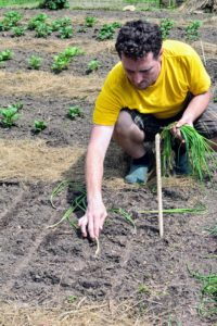 Here, Ryan lines up the white onions. Although the white onion makes up only five-percent of the American onion harvest, it is the all-purpose onion. It has pure white skin and sweet, mild white flesh. White onions are commonly used in sauces, pasta salads, and in Mexican and Southwestern cuisines.