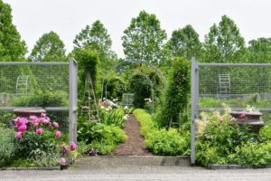 This garden is one of the first you see when visiting my farm. It is several years old now and has developed more and more every year. I wanted the plants to be mixed, so every bed in this garden would be interesting and colorful.