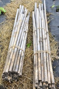 As the tomato plants grow, they need to be staked for support. Staking helps to keep the fruit off the ground, while helping to keep the plant somewhat upright. Don't use any chemically treated wood or other material for staking climbers, as the chemicals would likely run off and go into the soil. We use, and reuse, bamboo stakes that are light, easy to store and support our plants just right.