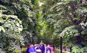The group was then led through the original Linden Allee. The linden tree is a medium to large tree with loose canopies that produce dappled shade below.