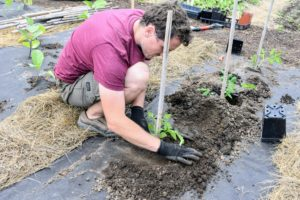 Planting deeply helps the plant to develop more roots, and more roots mean more ability to take up water and nutrients.