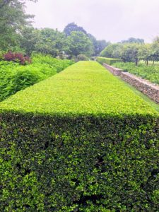 And look at this clipped boxwood hedge - it is so perfect. I could not stop admiring it.
