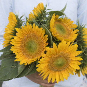 These have four to six inch blooms and are great for use as cut flowers. (Photo courtesy of Johnny's Selected Seeds)