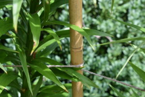 Here, the twine is carefully wrapped around the center bamboo upright.