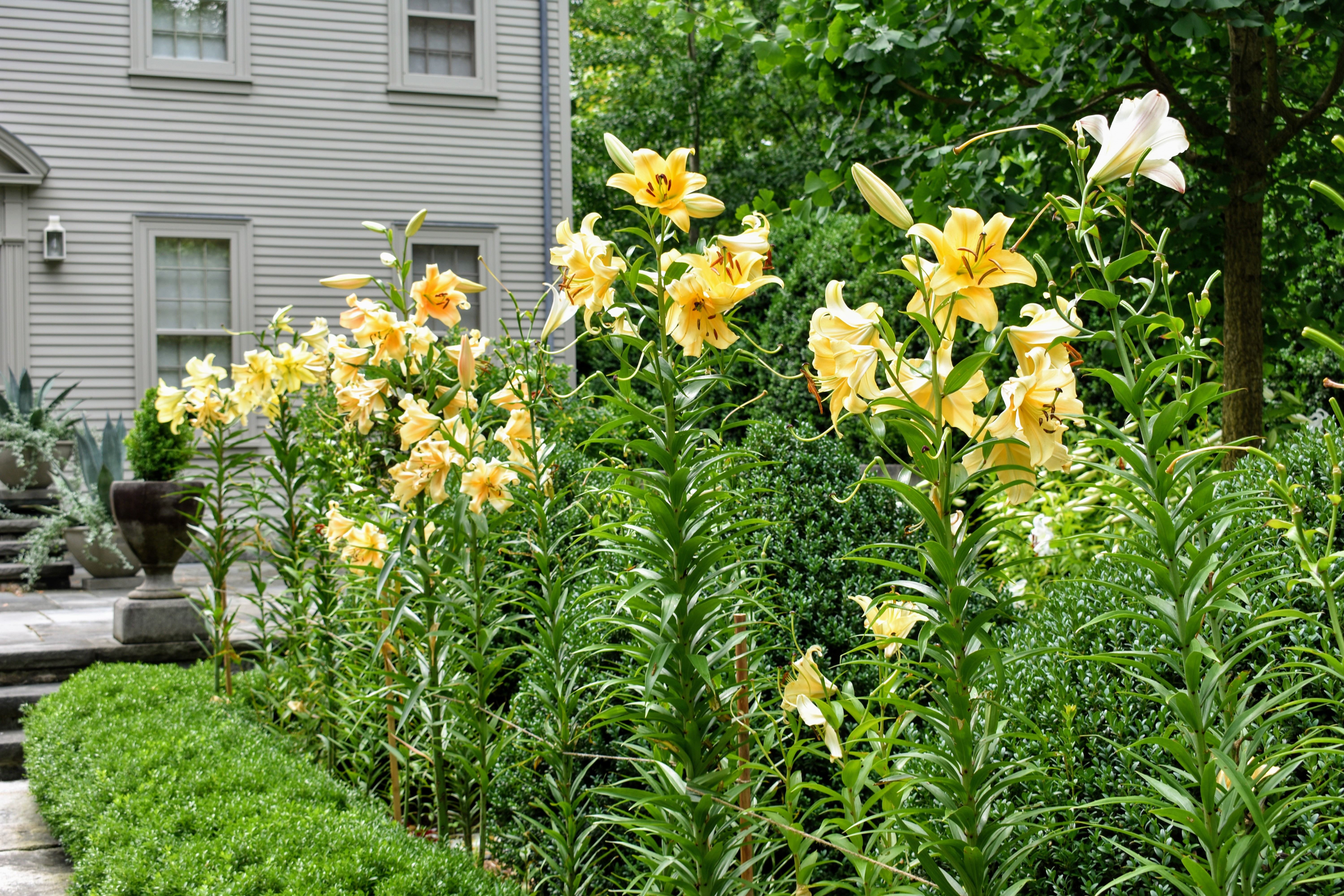 The Martha Stewart Blog Blog Archive Staking The Lilies In My