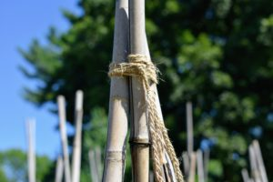 Here is a closer look at the tied bamboo. Tomato plants benefit from support, no matter what is used - tomato cages, stakes, or a myriad of other creative solutions. They make the fruits easier to harvest, keep fruits clean and help to prevent plant diseases.