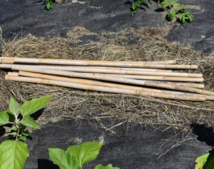 We also used bamboo stakes cut into two-foot long pieces. We already have a supply of bamboo, so it made sense to reuse and repurpose them.