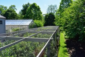 The netting covers the blueberry bushes on all sides. I use a durable plastic bird netting, which can be reused every season for several years.