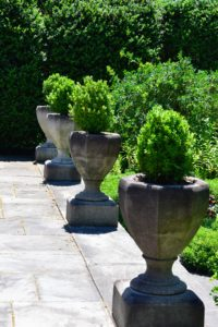 At the edge of this terrace, just across from the agaves are these stone planters filled with boxwood.