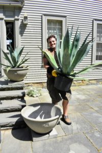 Here is Ryan placing each of the agaves into its pot, making sure it fits well and is level before planting.