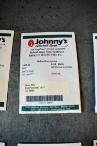 'ProCut® White Nite' is a new variety from Johnny's. These flowers have creamy pale-yellow, almost white petals on dark centers.